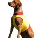 abc4dog Safety T-Shirt